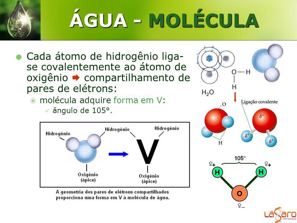 ÁGUA - MOLÉCULA Cada átomo de hidrogênio liga-se covalentemente ao átomo de oxigênio  compartilhamento de pares de elétrons: