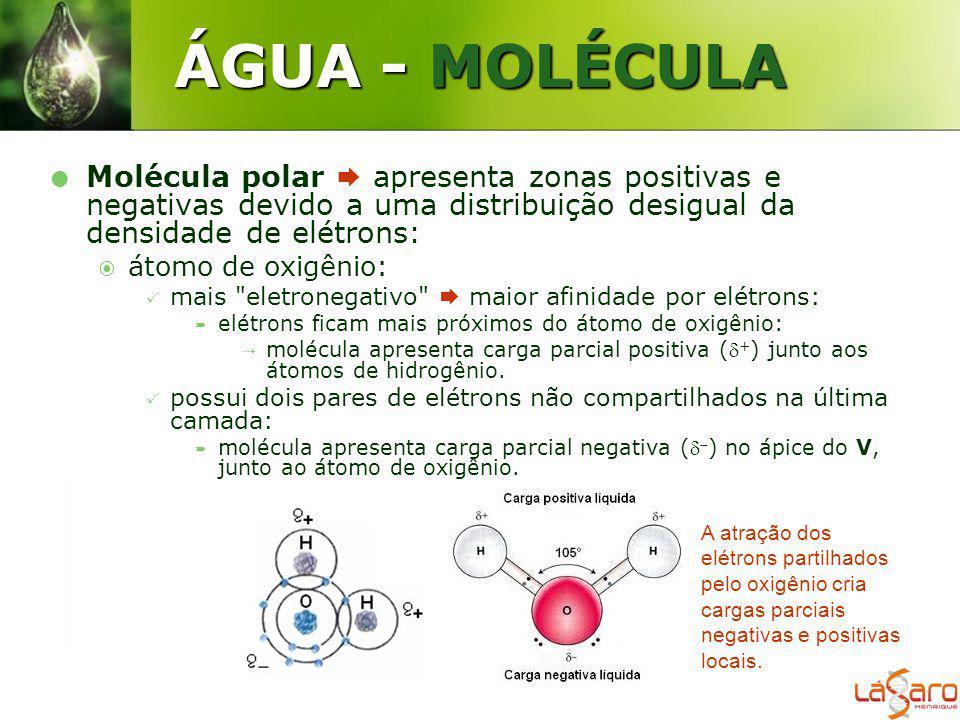 ÁGUA - MOLÉCULA Molécula polar  apresenta zonas positivas e negativas devido a uma distribuição desigual da densidade de elétrons: