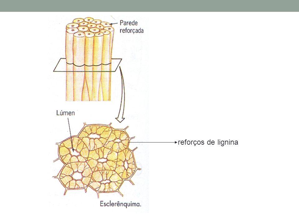 reforços de lignina