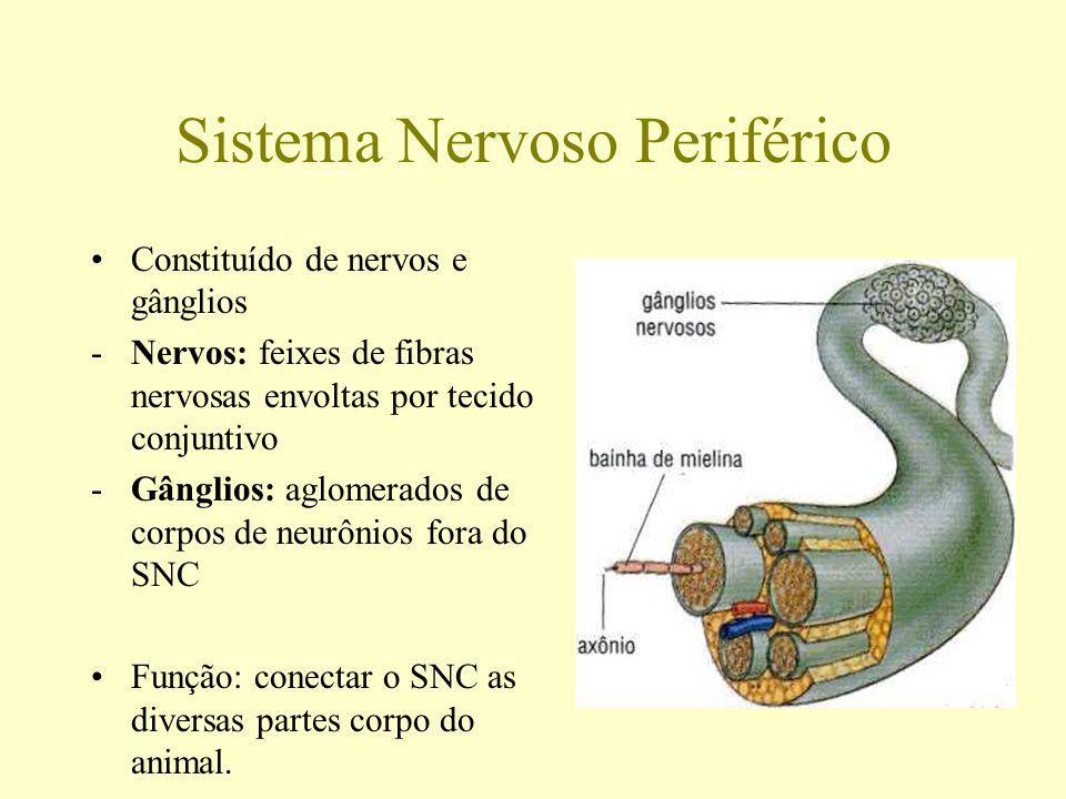 Sistema Nervoso Periférico