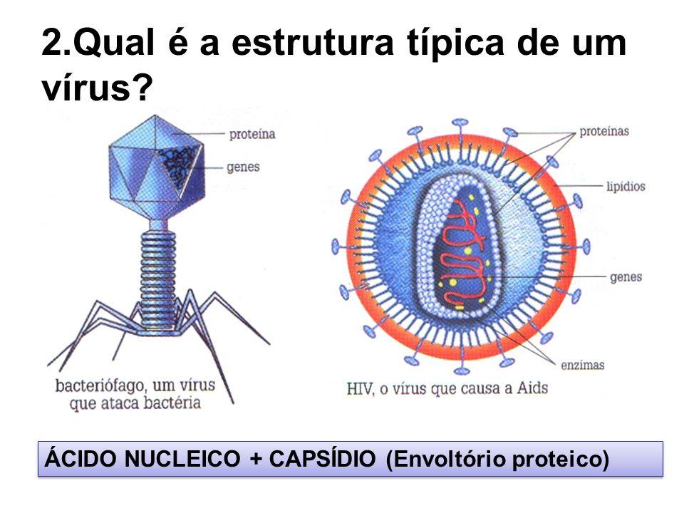 2.Qual é a estrutura típica de um vírus