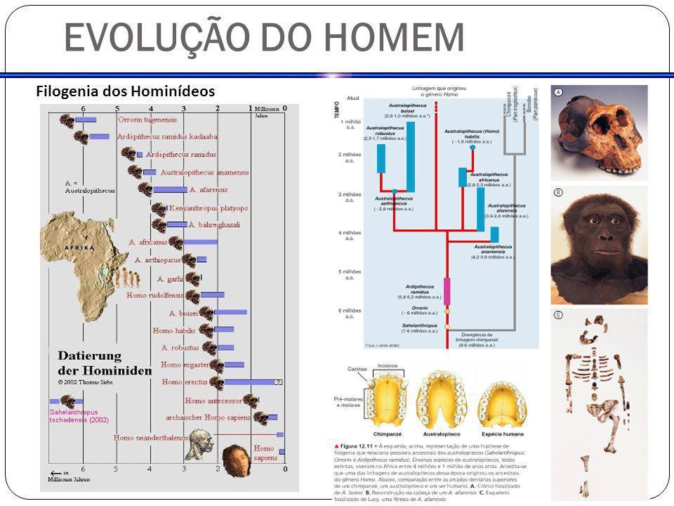 EVOLUÇÃO DO HOMEM Filogenia dos Hominídeos