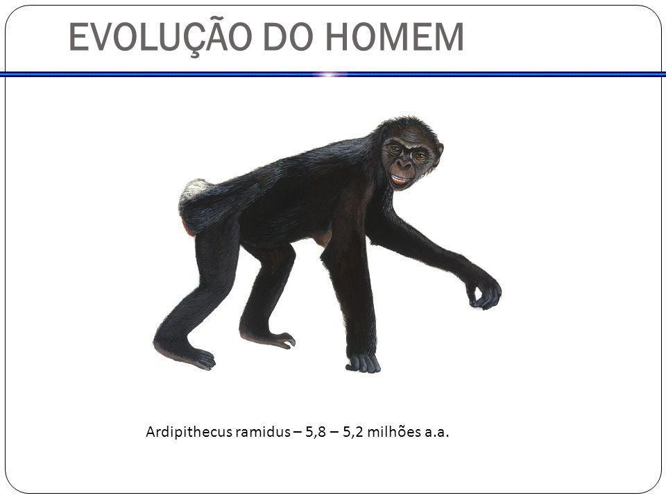 EVOLUÇÃO DO HOMEM Ardipithecus ramidus – 5,8 – 5,2 milhões a.a.