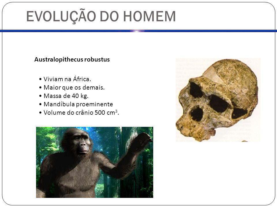EVOLUÇÃO DO HOMEM Australopithecus robustus Viviam na África.