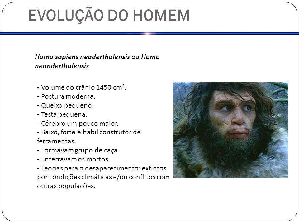 EVOLUÇÃO DO HOMEM Homo sapiens neaderthalensis ou Homo neanderthalensis. - Volume do crânio 1450 cm3.