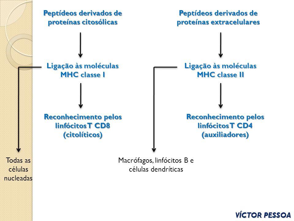 Peptídeos derivados de proteínas citosólicas