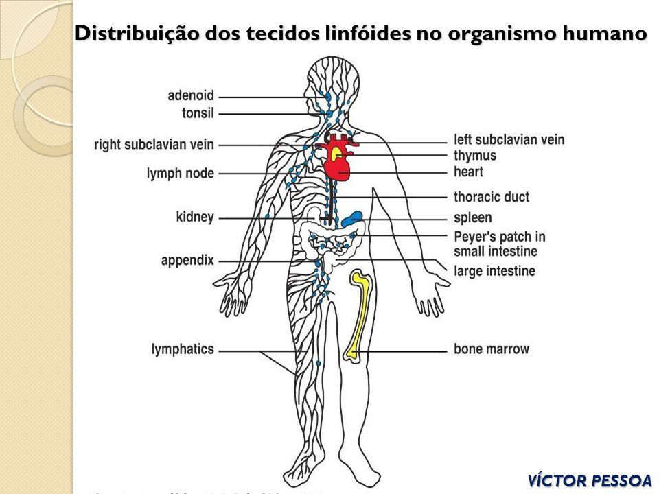Distribuição dos tecidos linfóides no organismo humano