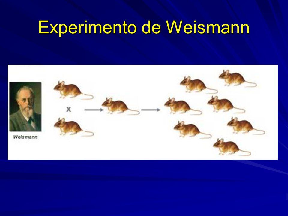 Experimento de Weismann