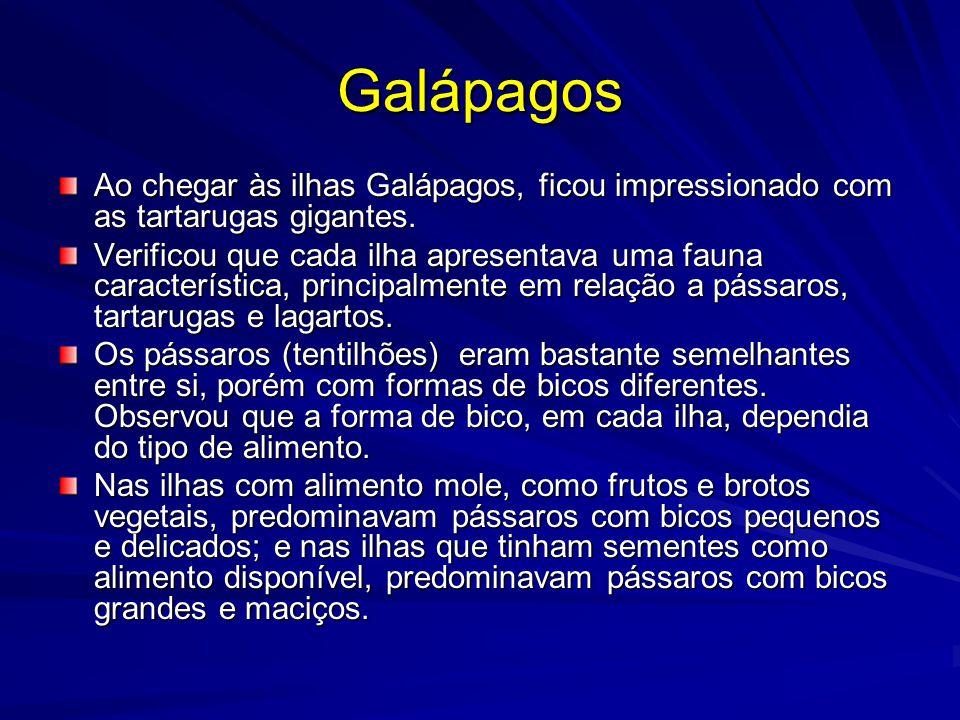 Galápagos Ao chegar às ilhas Galápagos, ficou impressionado com as tartarugas gigantes.