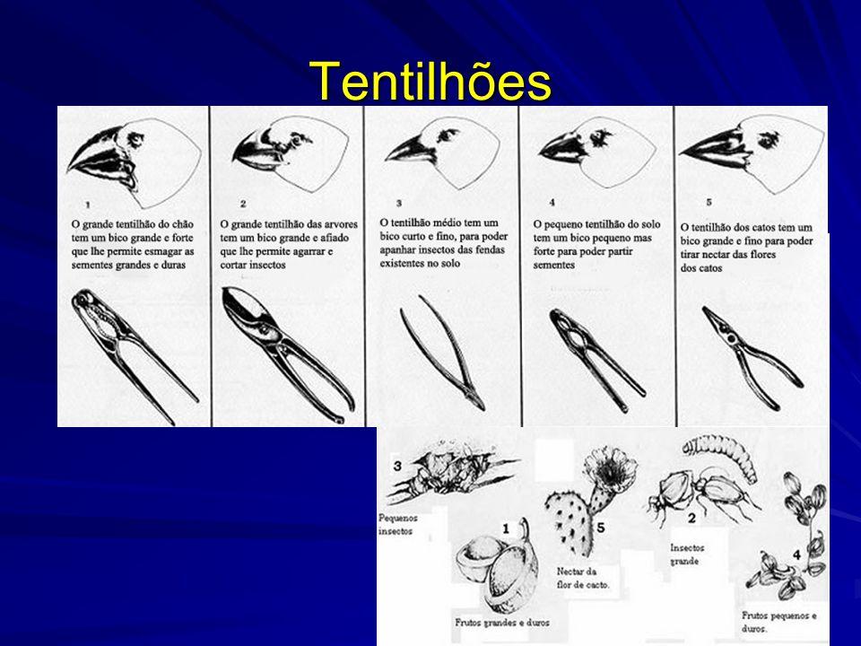 Tentilhões