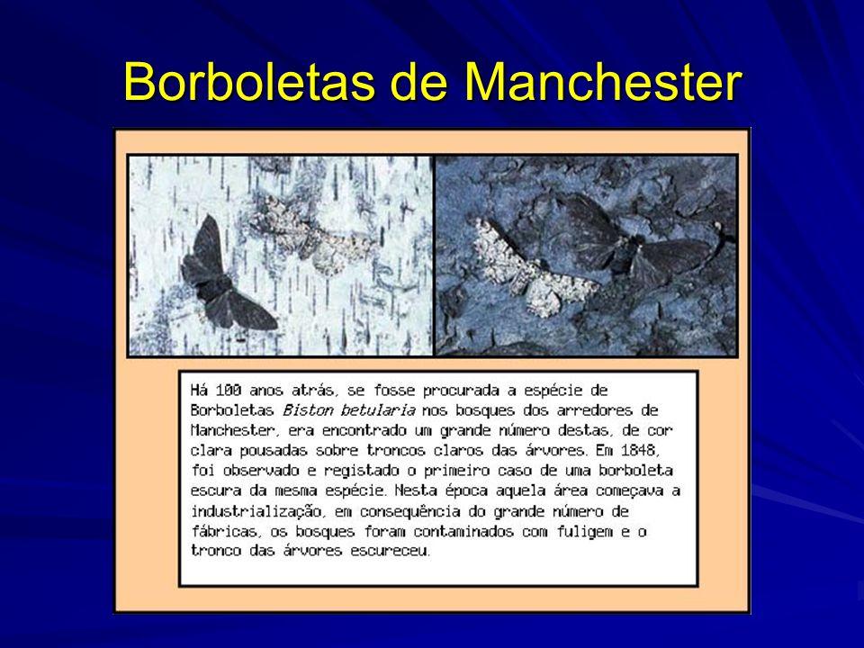 Borboletas de Manchester