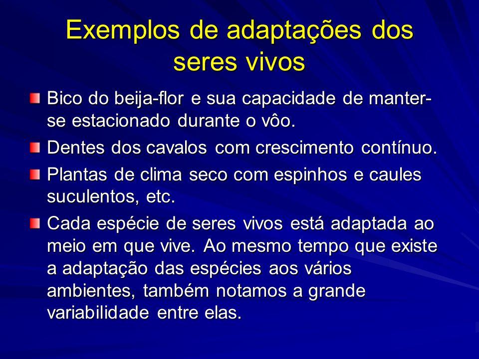 Exemplos de adaptações dos seres vivos