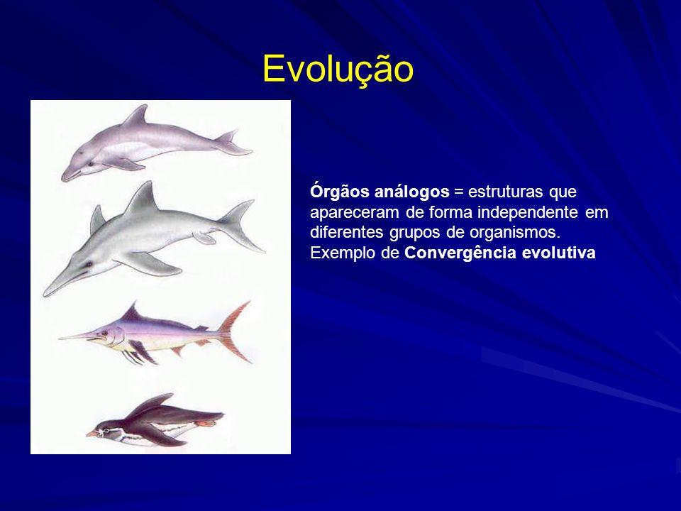 Evolução Órgãos análogos = estruturas que apareceram de forma independente em diferentes grupos de organismos.