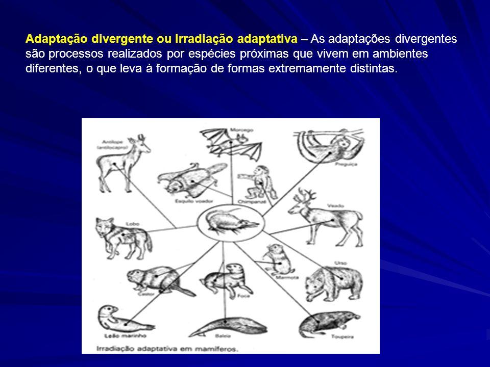 Adaptação divergente ou Irradiação adaptativa – As adaptações divergentes são processos realizados por espécies próximas que vivem em ambientes diferentes, o que leva à formação de formas extremamente distintas.
