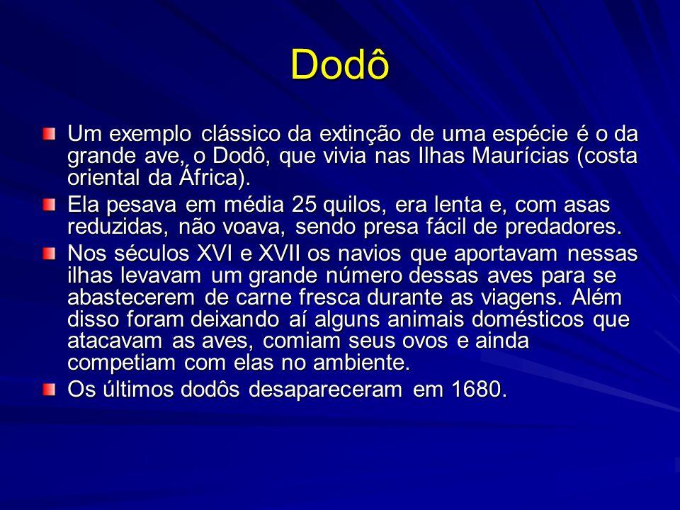 Dodô Um exemplo clássico da extinção de uma espécie é o da grande ave, o Dodô, que vivia nas Ilhas Maurícias (costa oriental da África).