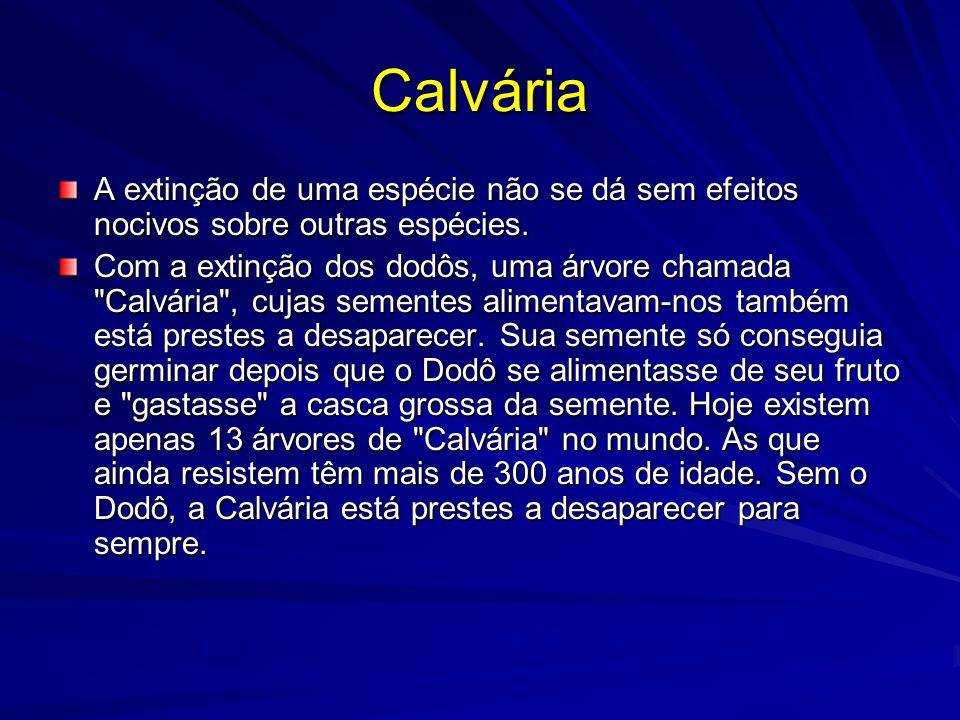 Calvária A extinção de uma espécie não se dá sem efeitos nocivos sobre outras espécies.