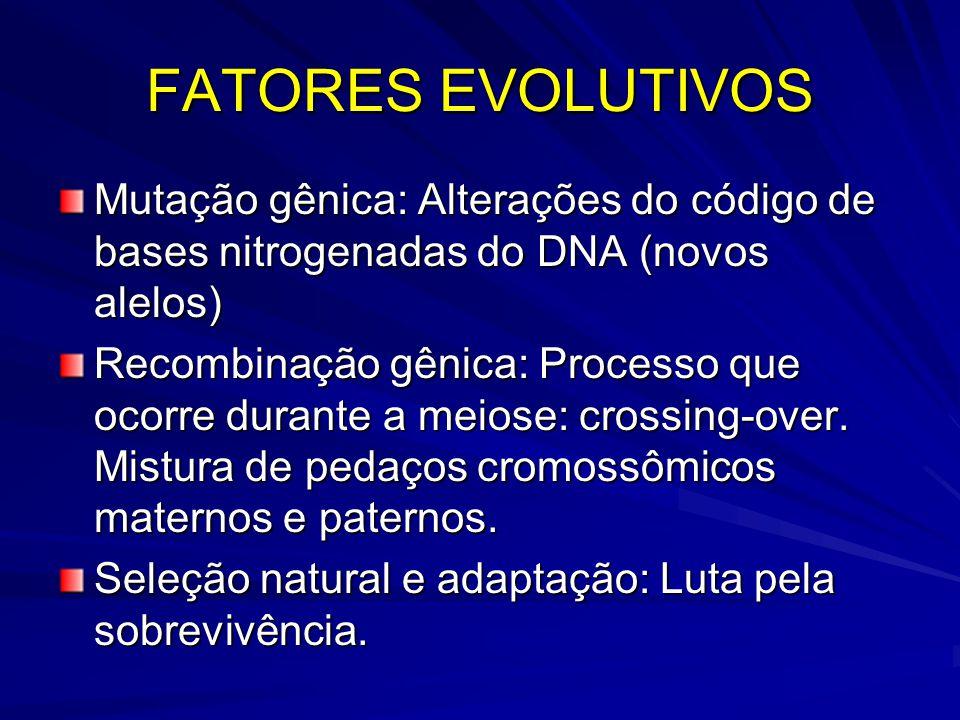 FATORES EVOLUTIVOS Mutação gênica: Alterações do código de bases nitrogenadas do DNA (novos alelos)