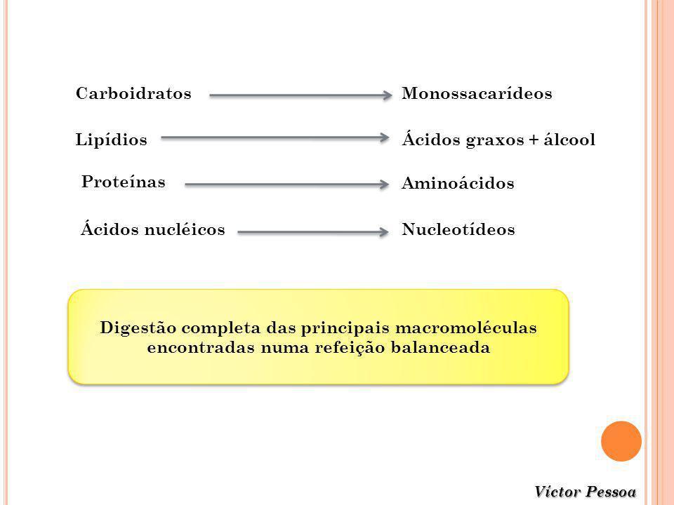 Digestão completa das principais macromoléculas