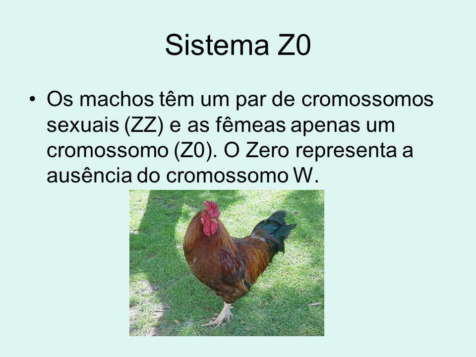 Sistema Z0 Os machos têm um par de cromossomos sexuais (ZZ) e as fêmeas apenas um cromossomo (Z0).