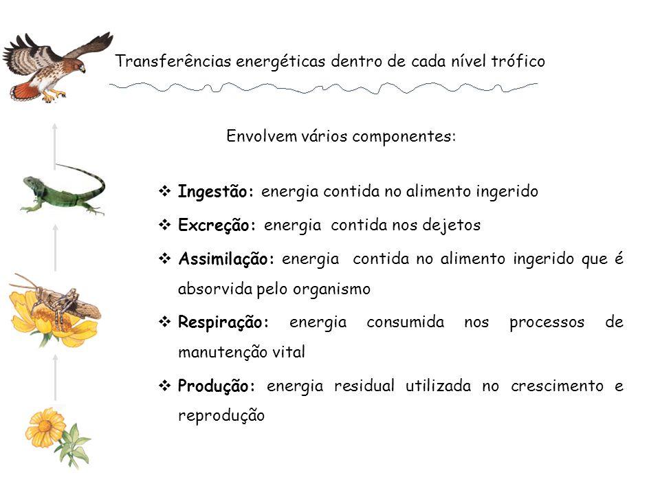 Transferências energéticas dentro de cada nível trófico