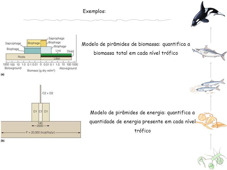 Exemplos: Modelo de pirâmides de biomassa: quantifica a biomassa total em cada nível trófico.