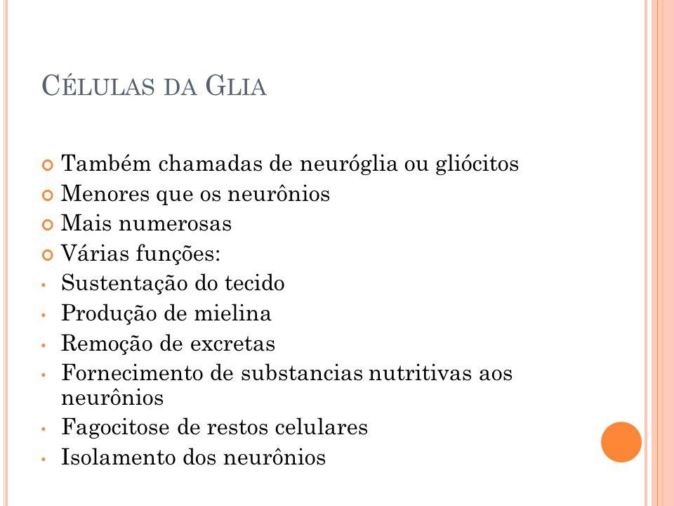 Células da Glia Também chamadas de neuróglia ou gliócitos