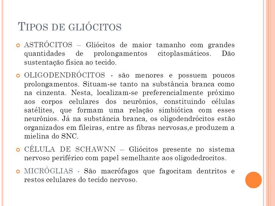 Tipos de gliócitos