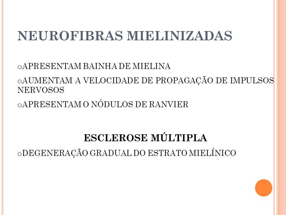 NEUROFIBRAS MIELINIZADAS