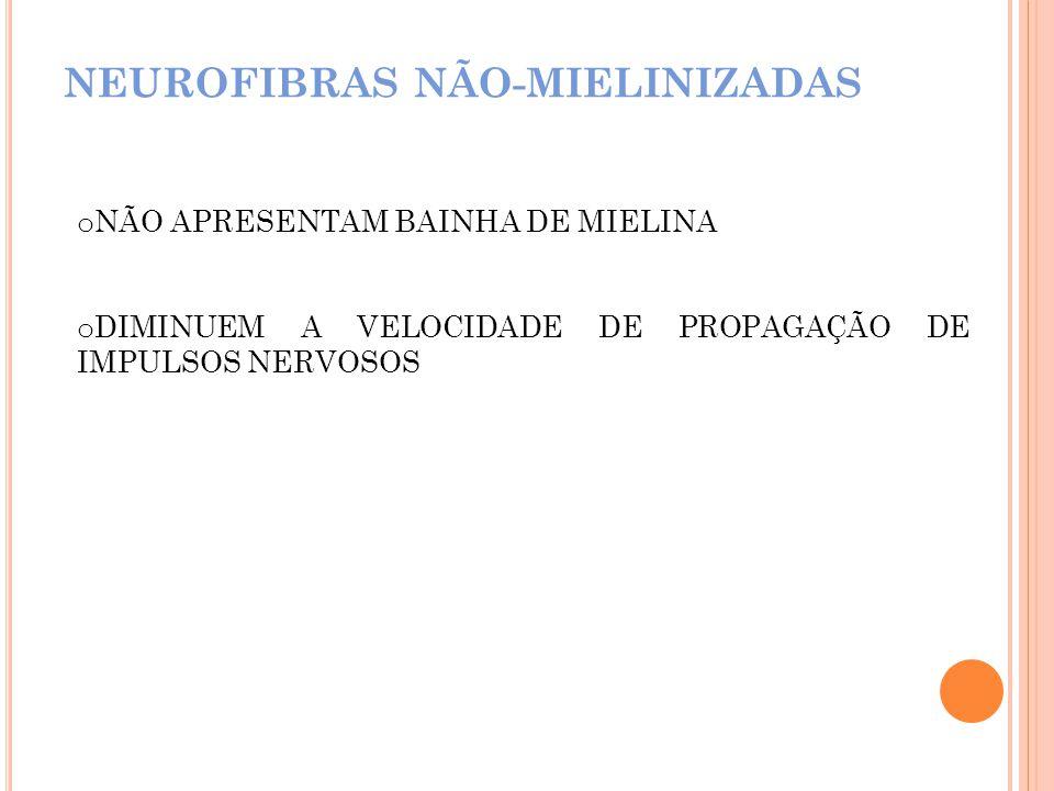 NEUROFIBRAS NÃO-MIELINIZADAS