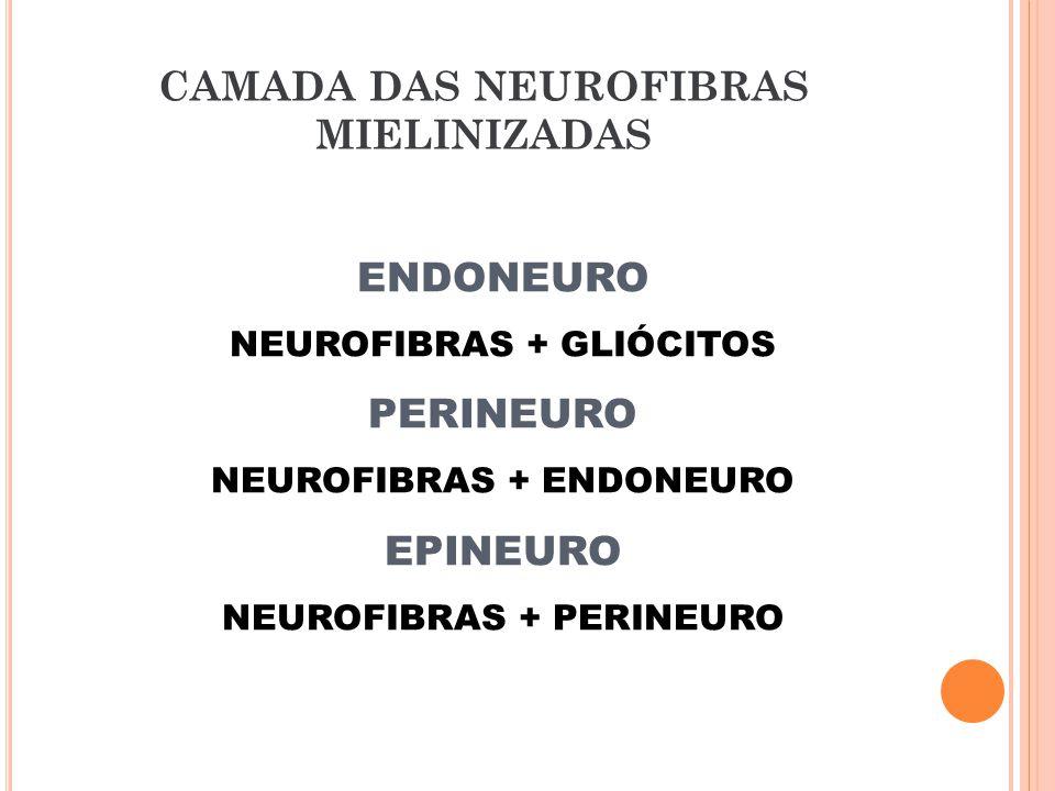 CAMADA DAS NEUROFIBRAS MIELINIZADAS