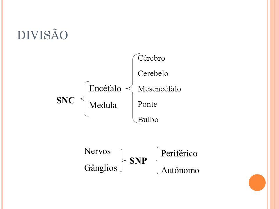 DIVISÃO Encéfalo Medula SNC Nervos Periférico Gânglios Autônomo SNP