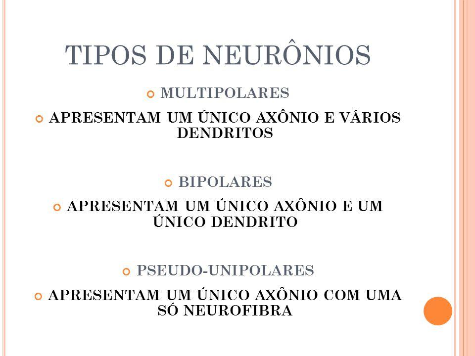TIPOS DE NEURÔNIOS MULTIPOLARES
