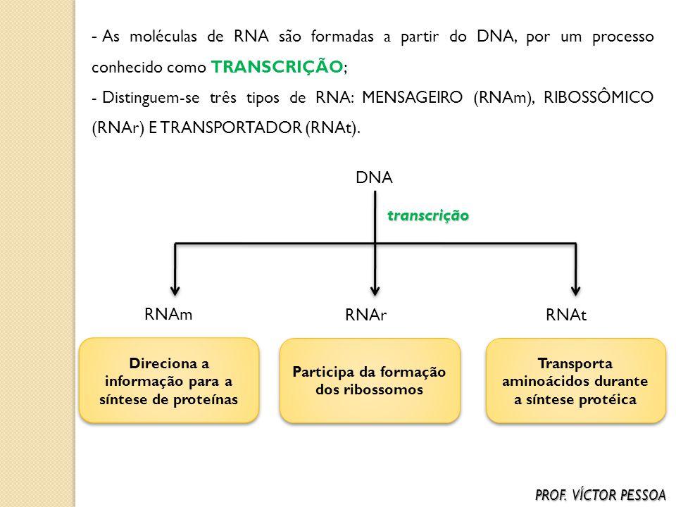 Direciona a informação para a síntese de proteínas