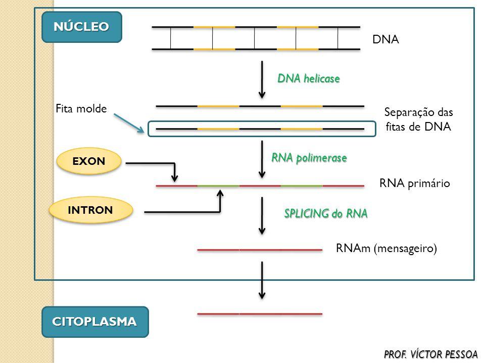 Separação das fitas de DNA