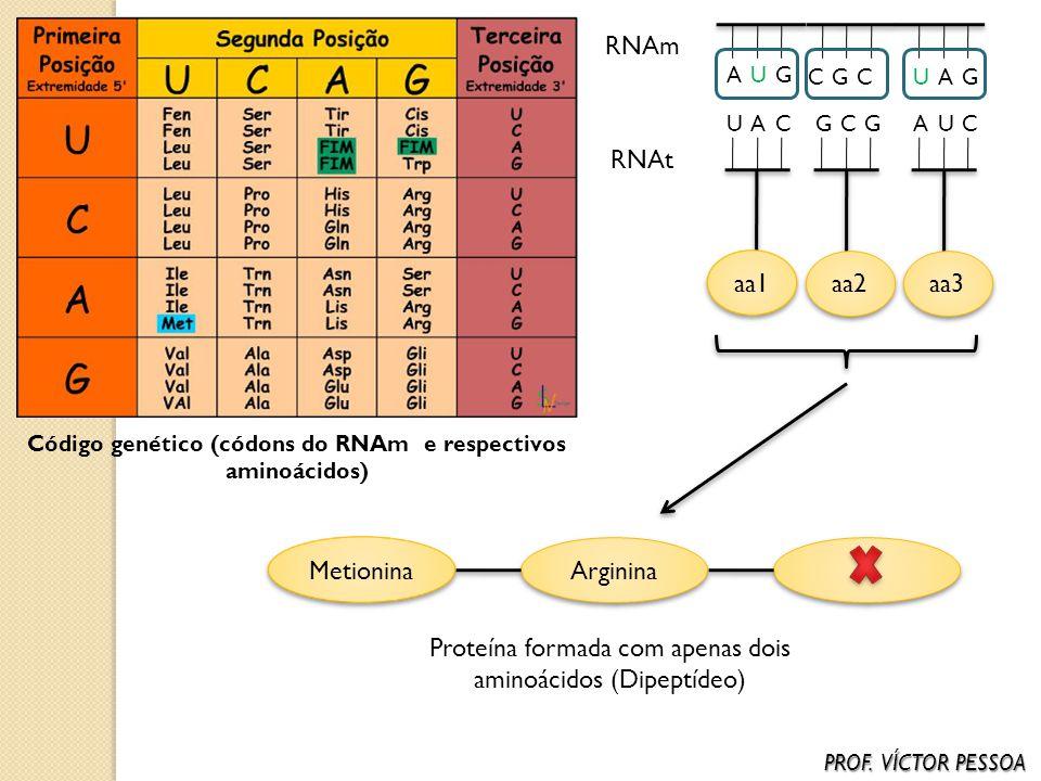 Código genético (códons do RNAm e respectivos aminoácidos)