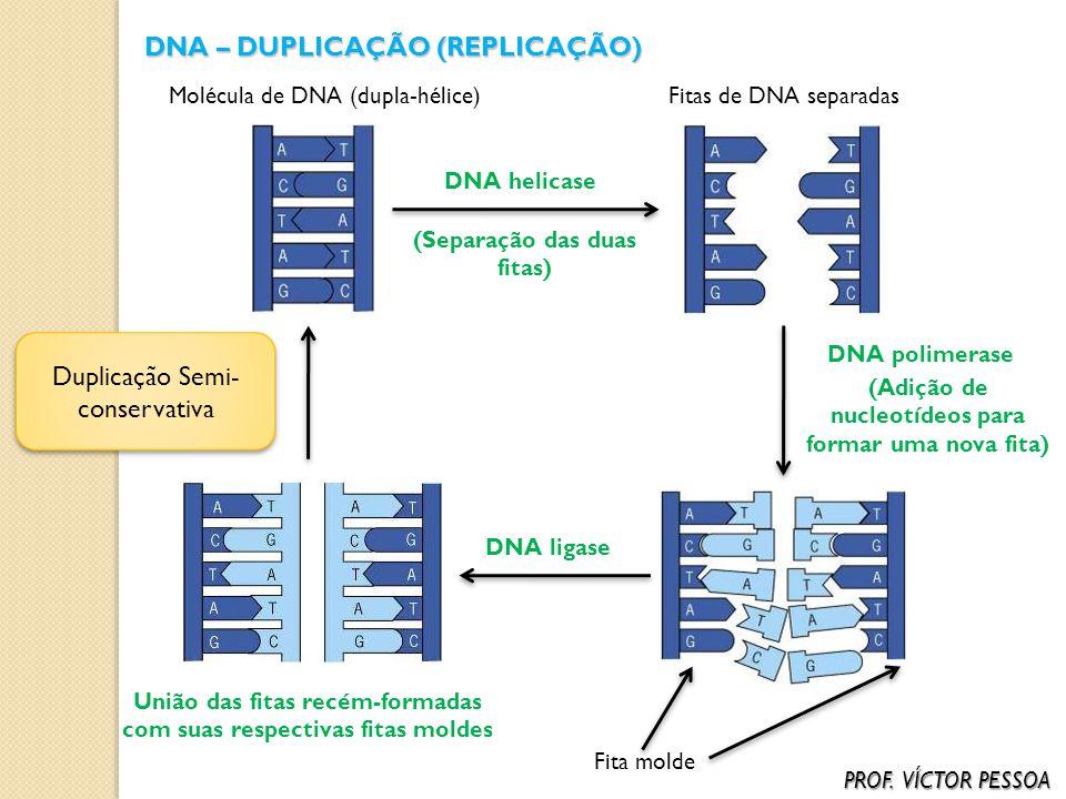 DNA – DUPLICAÇÃO (REPLICAÇÃO)