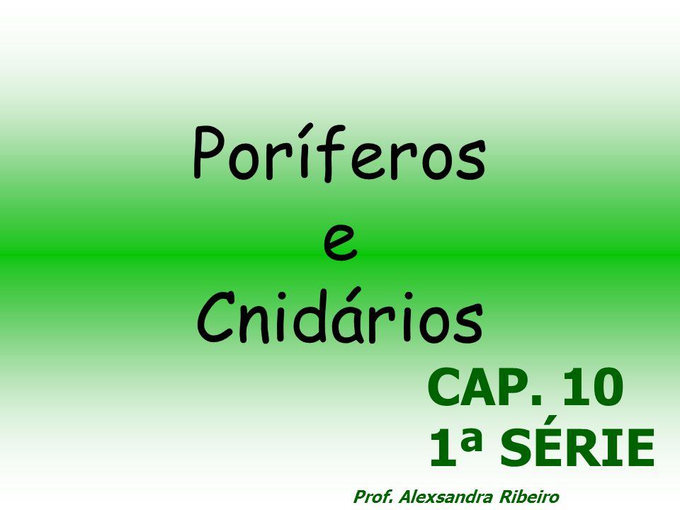 Poríferos e Cnidários CAP. 10 1ª SÉRIE Prof. Alexsandra Ribeiro