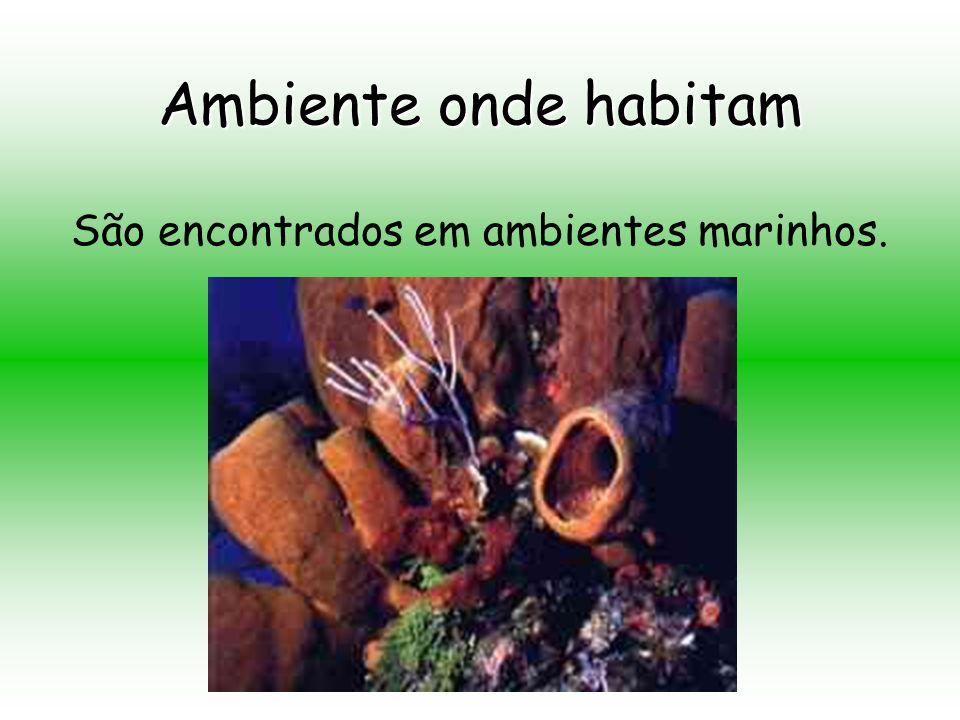 São encontrados em ambientes marinhos.