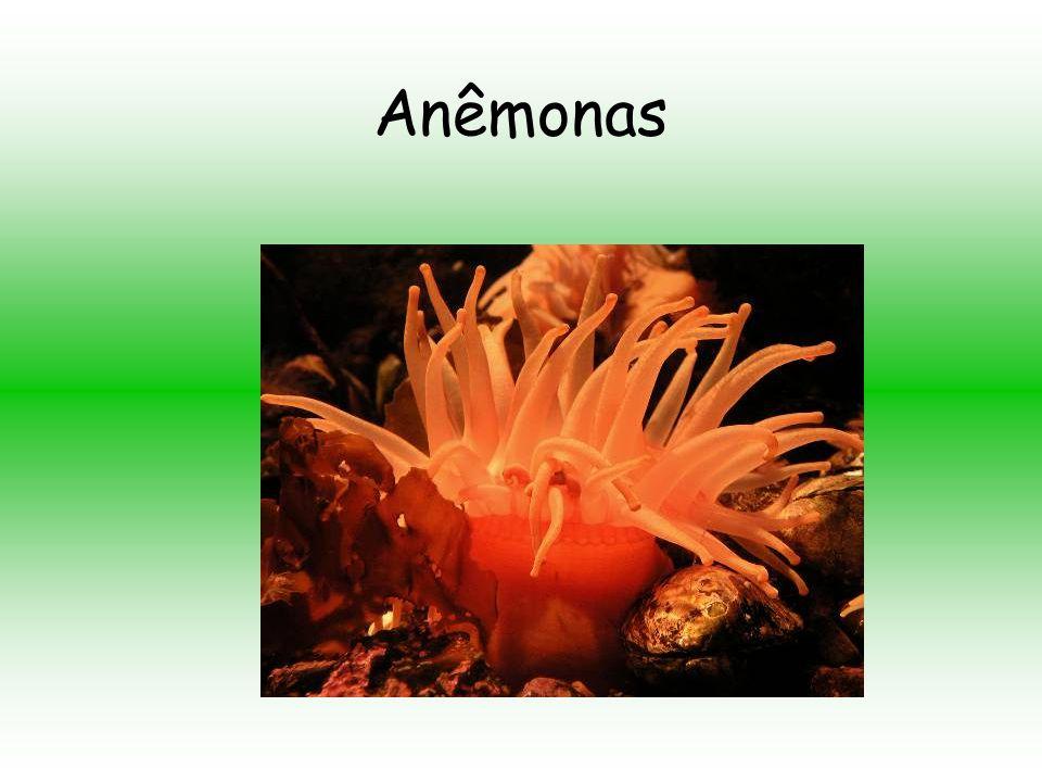 Anêmonas