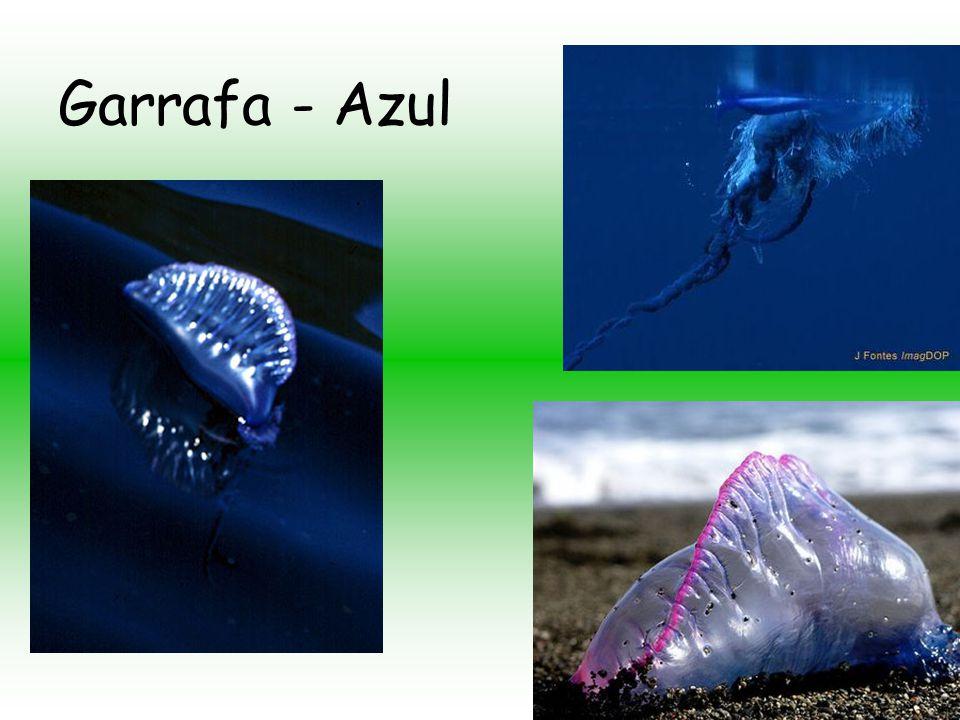 Garrafa - Azul