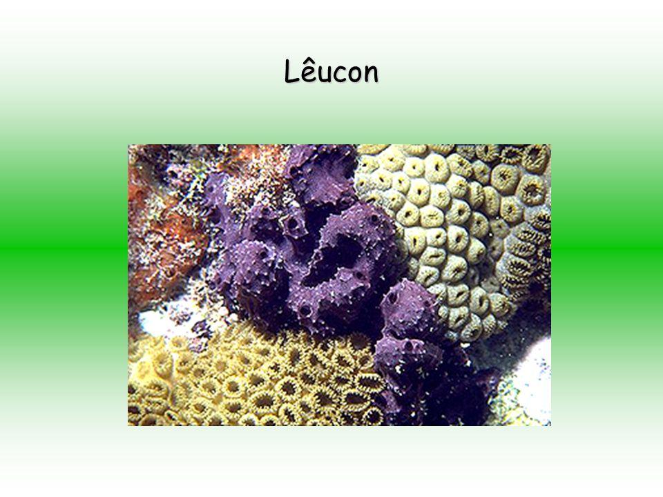 Lêucon