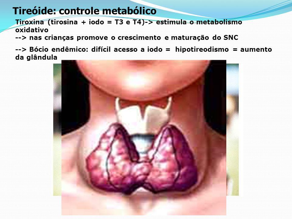 Tireóide: controle metabólico
