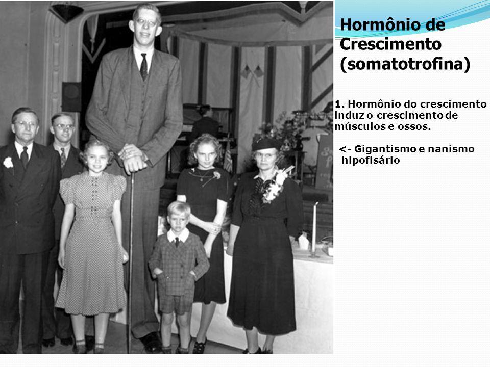 Crescimento (somatotrofina)