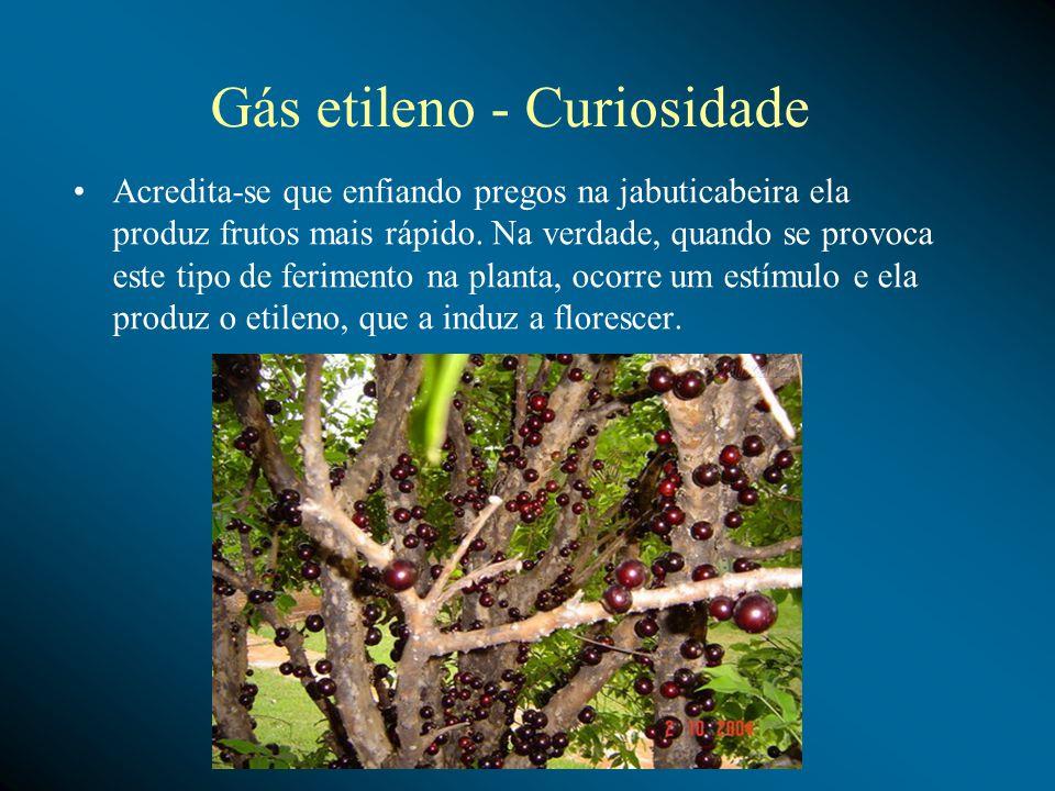 Gás etileno - Curiosidade