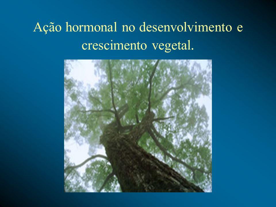 Ação hormonal no desenvolvimento e crescimento vegetal.