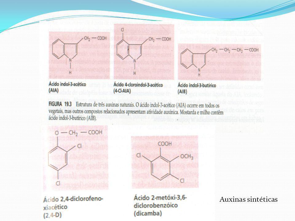 Auxinas sintéticas