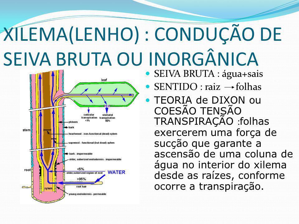 XILEMA(LENHO) : CONDUÇÃO DE SEIVA BRUTA OU INORGÂNICA