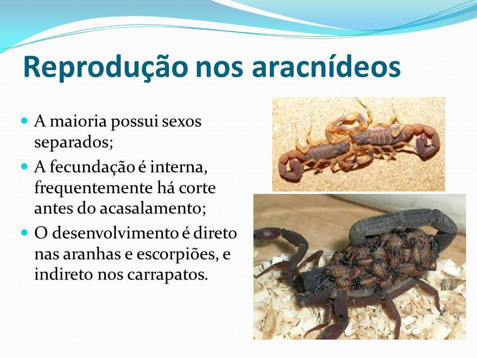 Reprodução nos aracnídeos