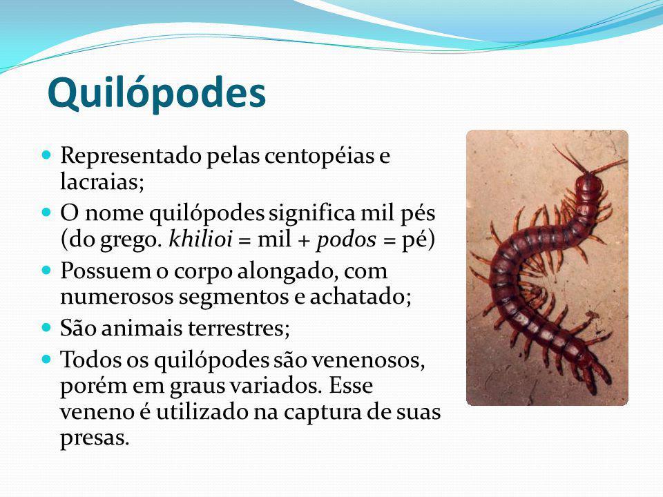 Quilópodes Representado pelas centopéias e lacraias;