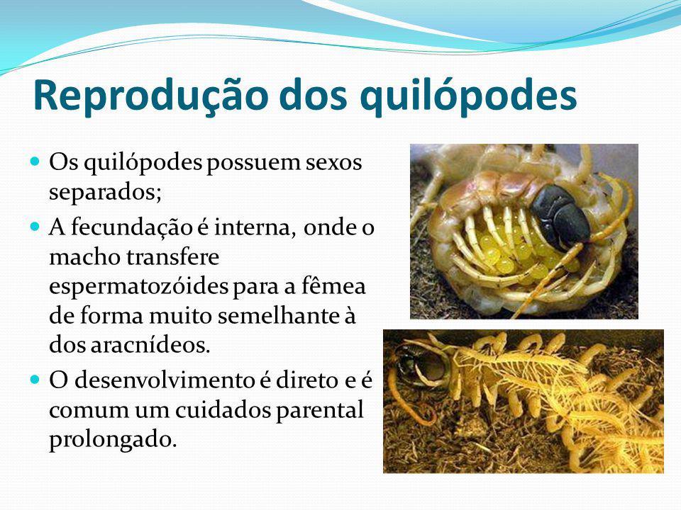 Reprodução dos quilópodes